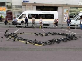 Любовь и голуби, часть вторая