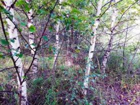 Как посадить дерево и не загнуться. Дневники отчаянных горе-садоводов